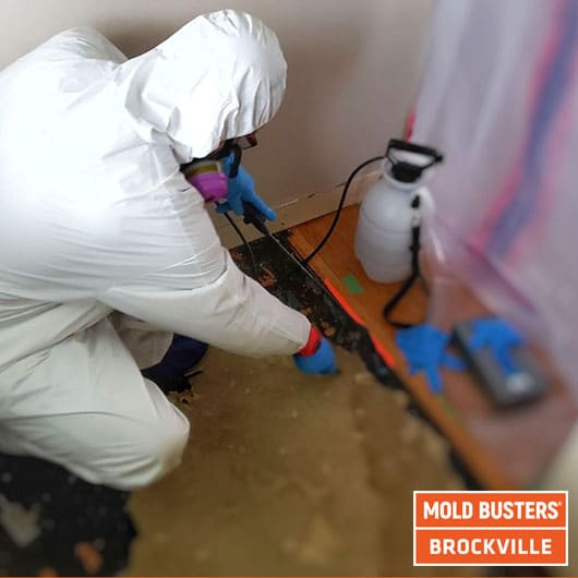 Active mold removal - Brockville