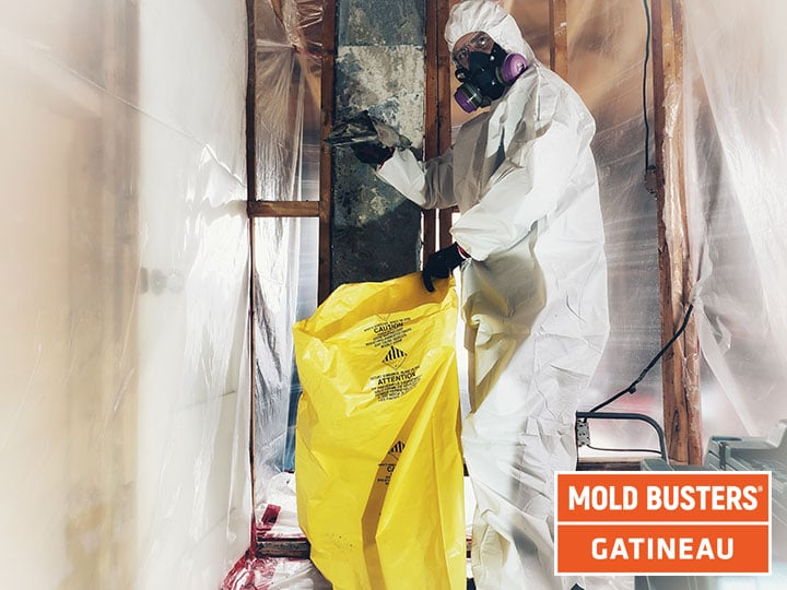 Mold removal Gatineau