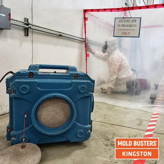 Commercial mold removal - Kingston