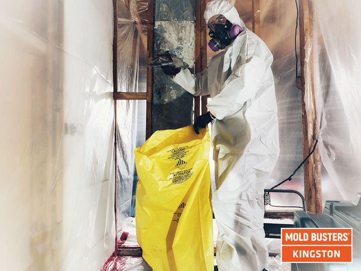 Mold removal Kingston