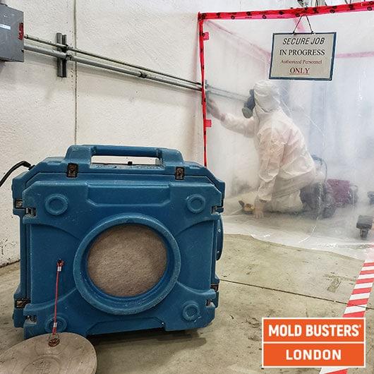 Mold remediation - London