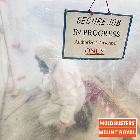 Commercial mold remediation - Mount Royal
