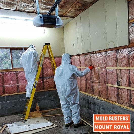 Garage mold removal - Mount Royal