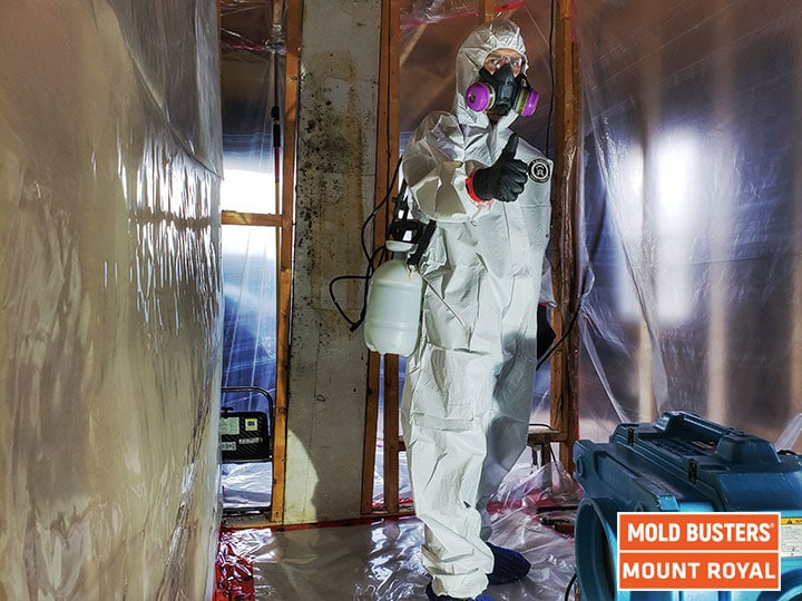 Mold removal Mount Royal