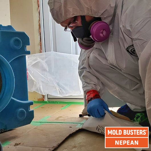 Mold remediation - preparation - Nepean