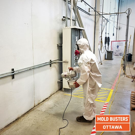 Commercial mold removal - Ottawa