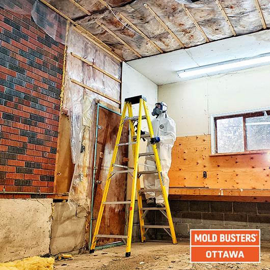 Garage mold remediation - Ottawa