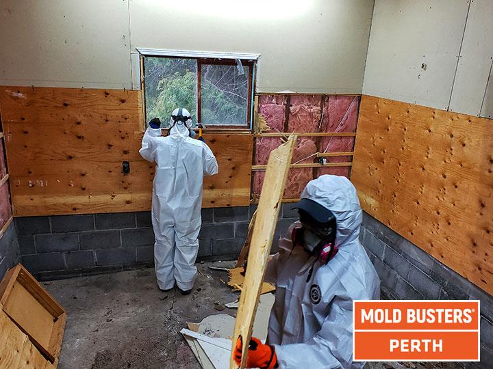 Mold removal Perth