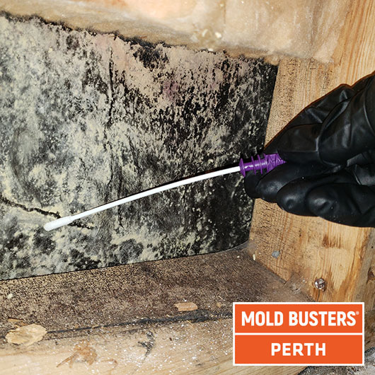 Mold testing - Perth