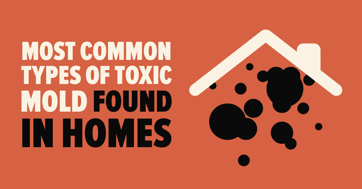 common types of toxic mold in homes