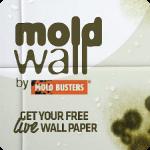 mold-wallpaper