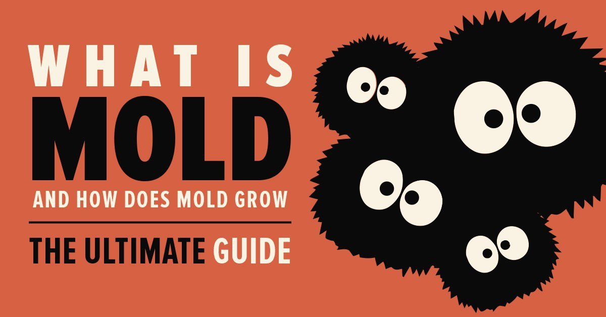 what is mold and how does mold grow