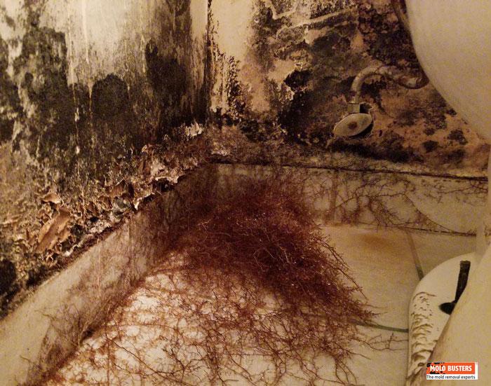 Mycelium growth