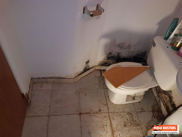 Bathroom Mold Removal Services Iicrc Amp Rbq Certified