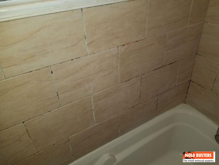 bathroom mold removal services iicrc rbq certified
