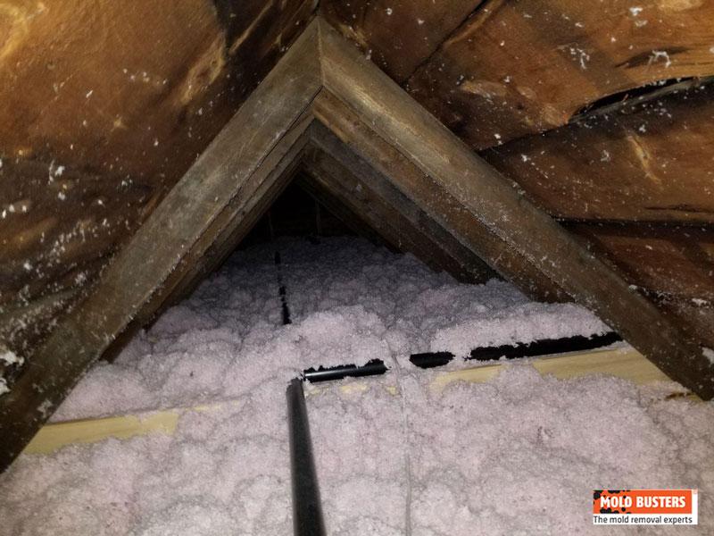 white mold in attic