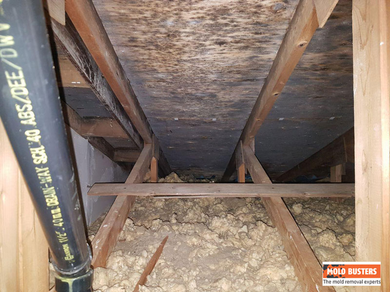 black mold on wood in attic