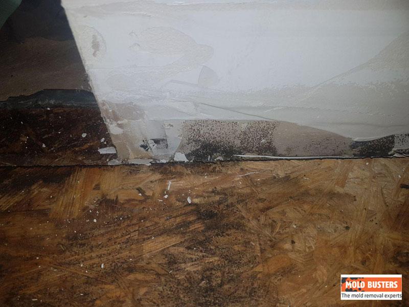 black mold on wooden floor
