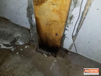 black mold on wooden pillar