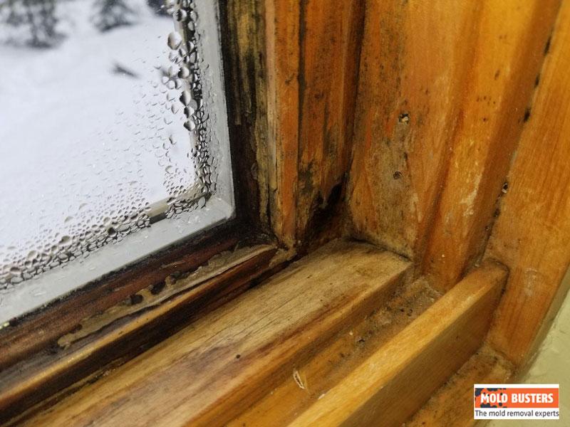 black mold on wooden windows