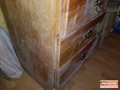 hidden mold on wooden furniture