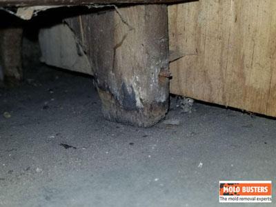 mold on wooden pillar
