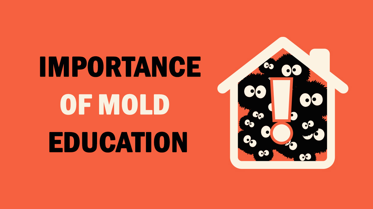 Student Essay: Importance of Mold Education