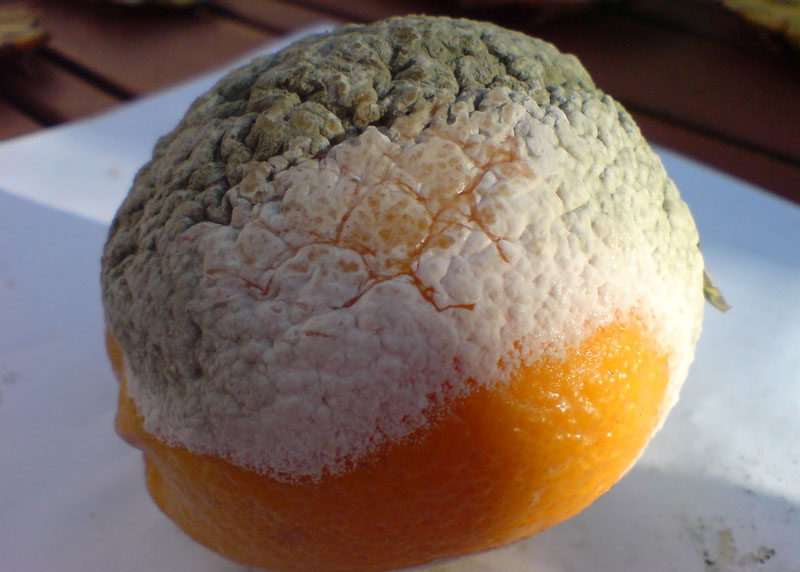 is it safe to eat moldy fruits