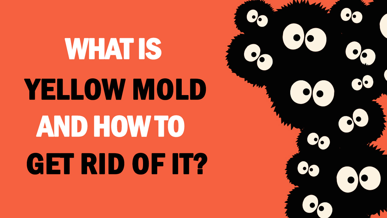 what is yellow mold