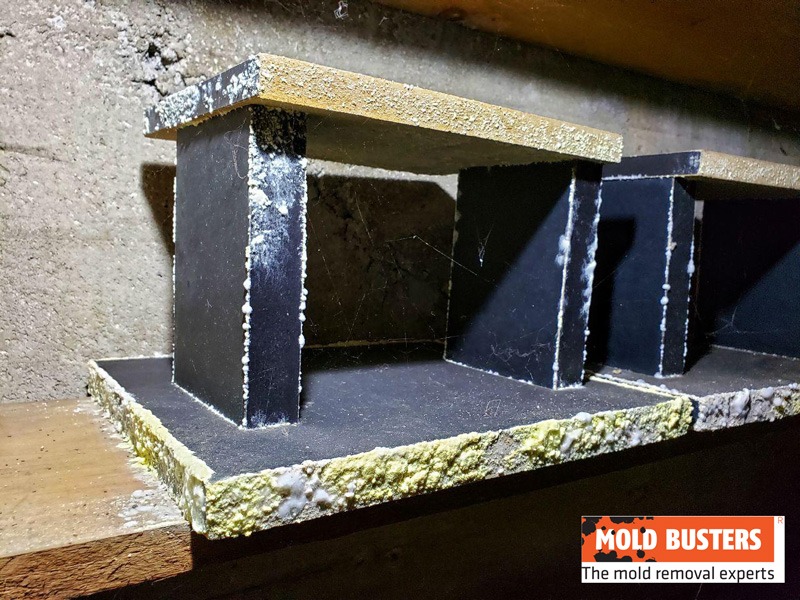 yellow mold in cold storage room