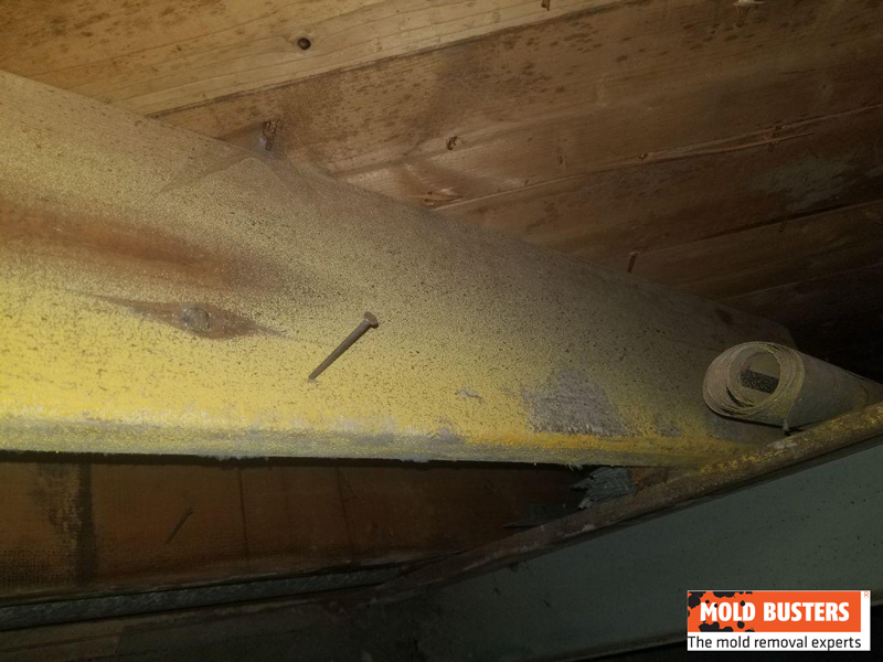 yellow mold in crawlspace