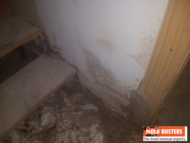 brown mold growth in damp place