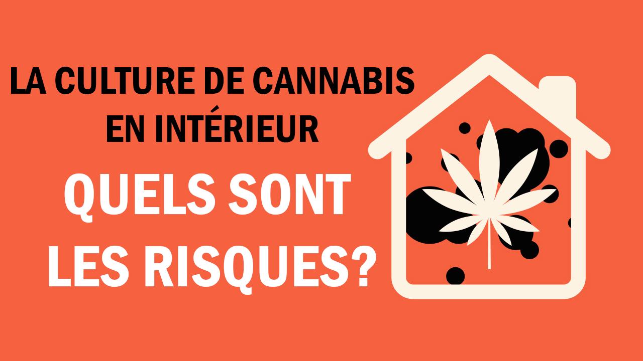 Les risques liés à la culture de marijuana dans une maison