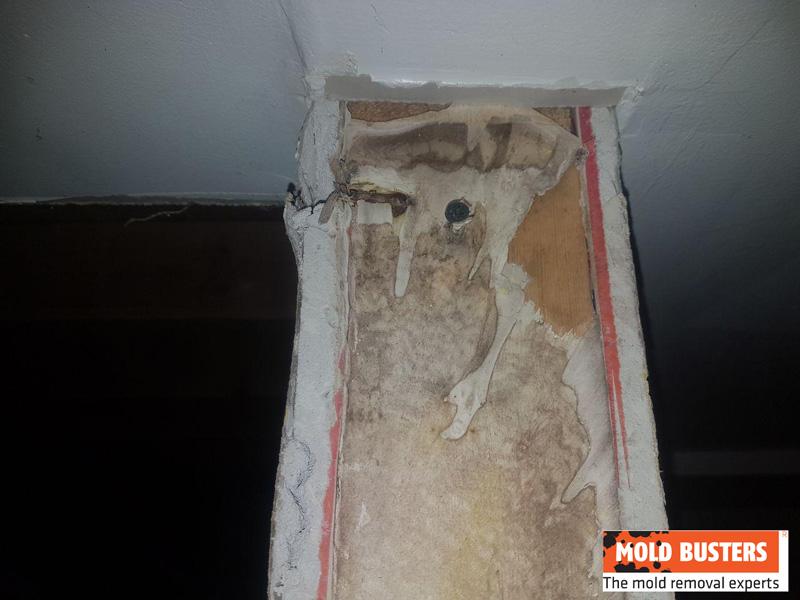 hidden brown mold growth