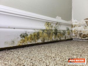 yellow and green mold on wall