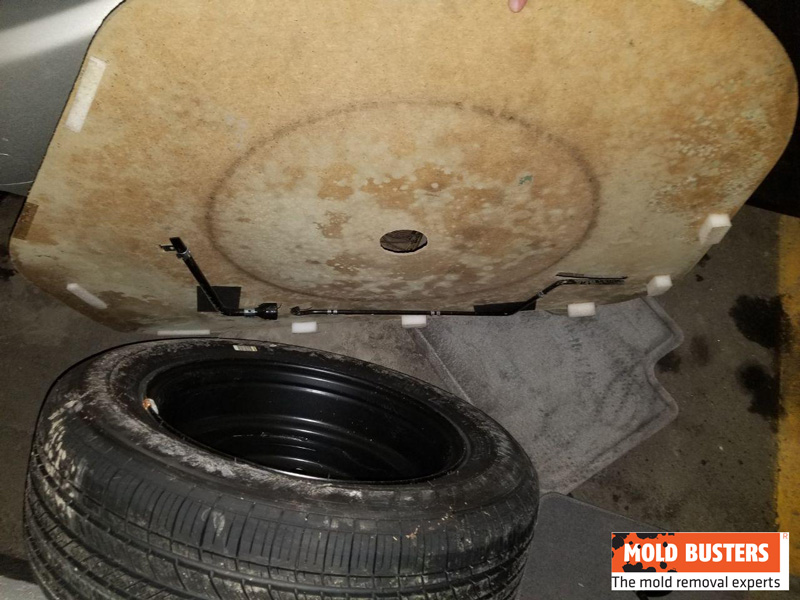 mold in car trunk