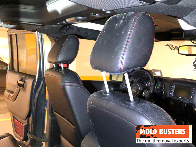 mold in car upholstery