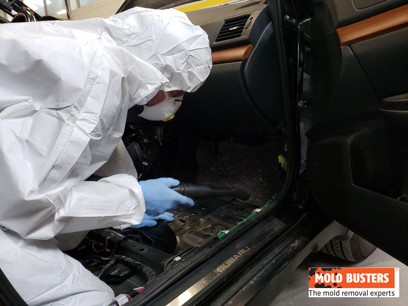 professional mold in car removal