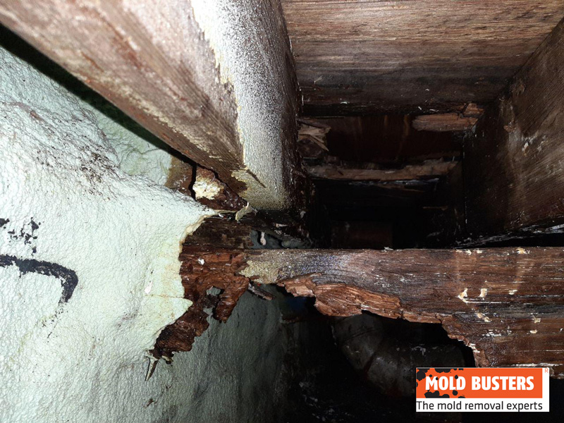 damage done by dry rot on main supportive joist after remediation