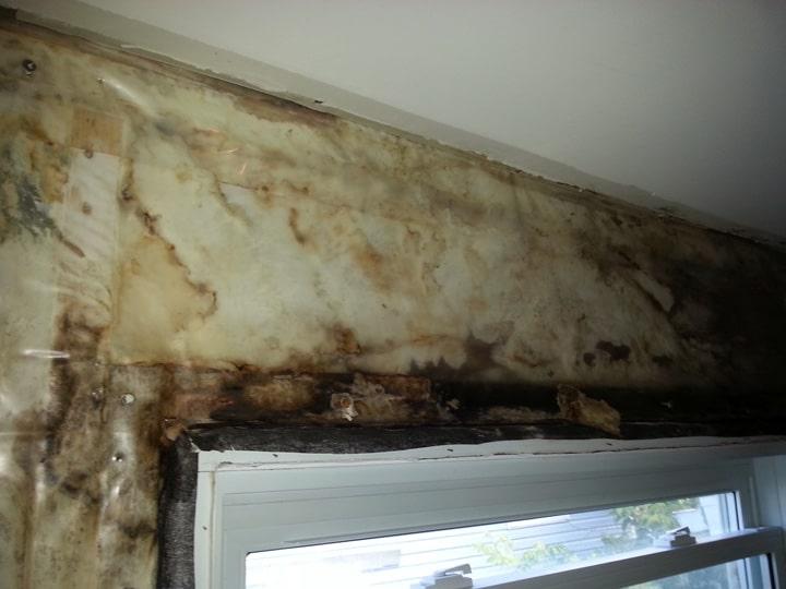mold testing ottawa hidden wall mold1