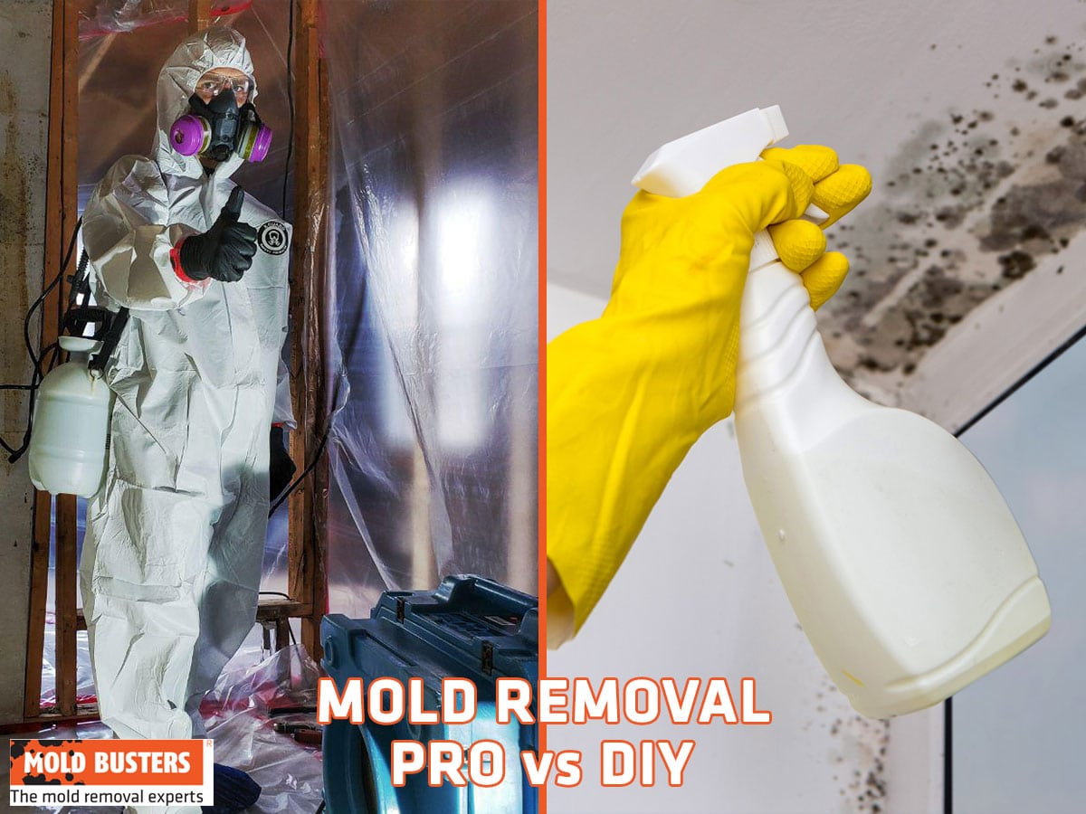 What Kills Mold: DIY vs Professional Solutions